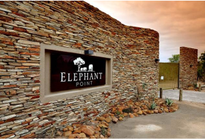 elephant point1