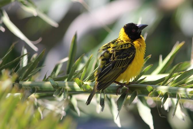 Hwange Bird 1