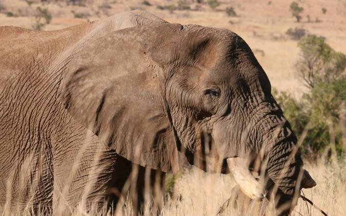 Tshukudu elephant blog 1.jpg